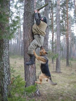 Russian dogs trees. Photo courtesy of EnglishRussia.com
