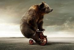Maggies Bear