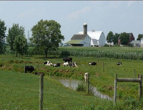 Amish dairy farm - Image: Wikimedia Commons