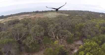 screenshot eagle takes down drone