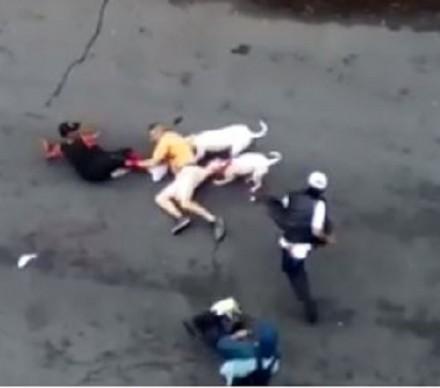 screenshot 911 pitbull attack bronx 001