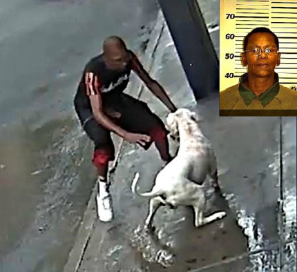 screenshot 911 pitbull attack bronx 003 CYNTHIA OLIVER DOG OWNER MUGSHOT EDITED