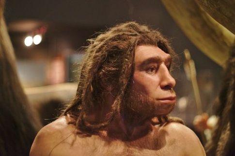 "<span style=""font-size: 8pt;"">Homo neanderthalensis by <a href=""https://www.flickr.com/photos/66451944@N03/42396583455/in/photolist-27ArzbP-eFACVg-eFADJp-eFADkn-boB2CQ-pyA5Ej-8ac8Ls-i5xhxG-8Gb3cn-8a9hT4-8a9mkc-848Qcb-CHxd7-c6AiQ1-sfEp4U-4RGExr-8Gee5G-8Geeoh-C5gqgN-8Gb3r8-ph84YL-CUujti-8Gb2XT-dfL4Ht-c6yJ8w-8Gb2sr-8GeeFm-5vb6cT-dfL4Pv-c6AjnQ-6B1Lx6-ZkCVE-4Dyiwy-85STG6-eaakwt-4giSK1-aJkB5c-MuqrCA-8GeeWU-RgYxg-bfCR5z-eJdzXj-bfgZET-6z8rbu-tuYCT-84vzS6-251dG5S-23CJZiY-bfCRcp-bg2iuH"">Thomas Vogt</a>-Flickr (<a href=""https://creativecommons.org/licenses/by-sa/2.0/"">CC BY-SA 2.0</a>) [Brain volume up to 1750cc (Homo sapiens average 1270 cc) LWL Museum of Natural History, Münster, Germany]</span>"